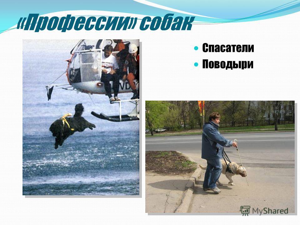 «Профессии» собак Спасатели Поводыри