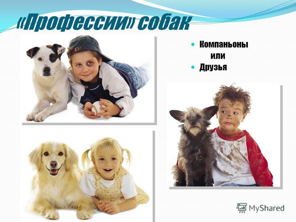 «Профессии» собак Компаньоны или Друзья