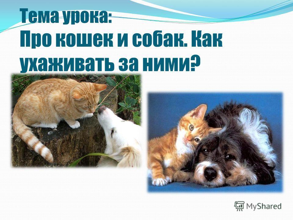 Тема урока: Про кошек и собак. Как ухаживать за ними?