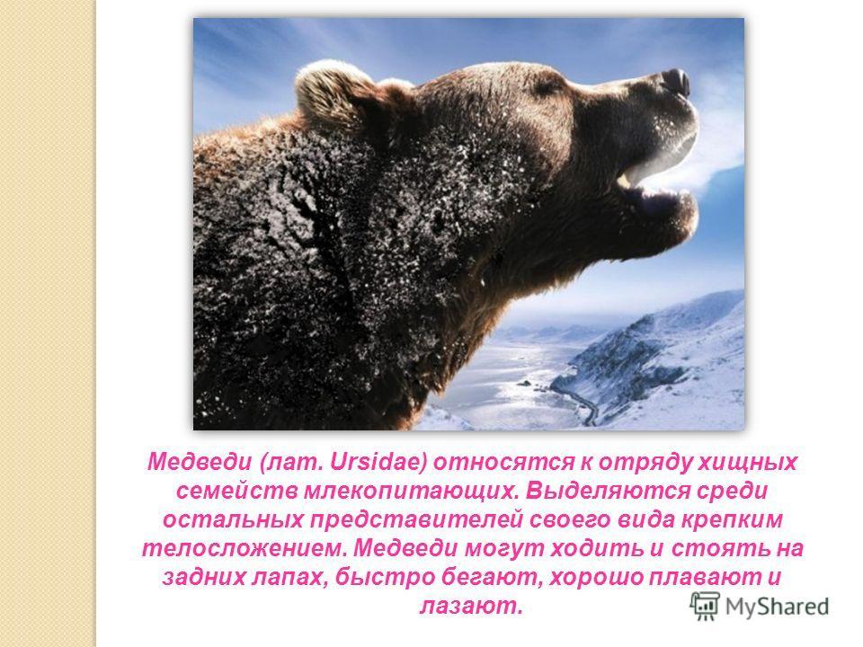 Медведи (лат. Ursidae) относятся к отряду хищных семейств млекопитающих. Выделяются среди остальных представителей своего вида крепким телосложением. Медведи могут ходить и стоять на задних лапах, быстро бегают, хорошо плавают и лазают.