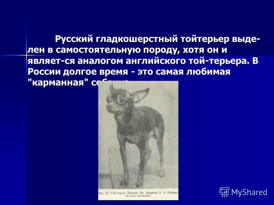 Русский гладкошерстный тойтерьер выде- лен в самостоятельную породу, хотя он и являет-ся аналогом английского той-терьера. В России долгое время - это самая любимая карманная собачка.