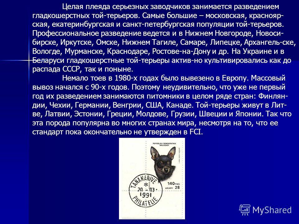 Целая плеяда серьезных заводчиков занимается разведением гладкошерстных той-терьеров. Самые большие – московская, краснояр- ская, екатеринбургская и санкт-петербургская популяции той-терьеров. Профессиональное разведение ведется и в Нижнем Новгороде,