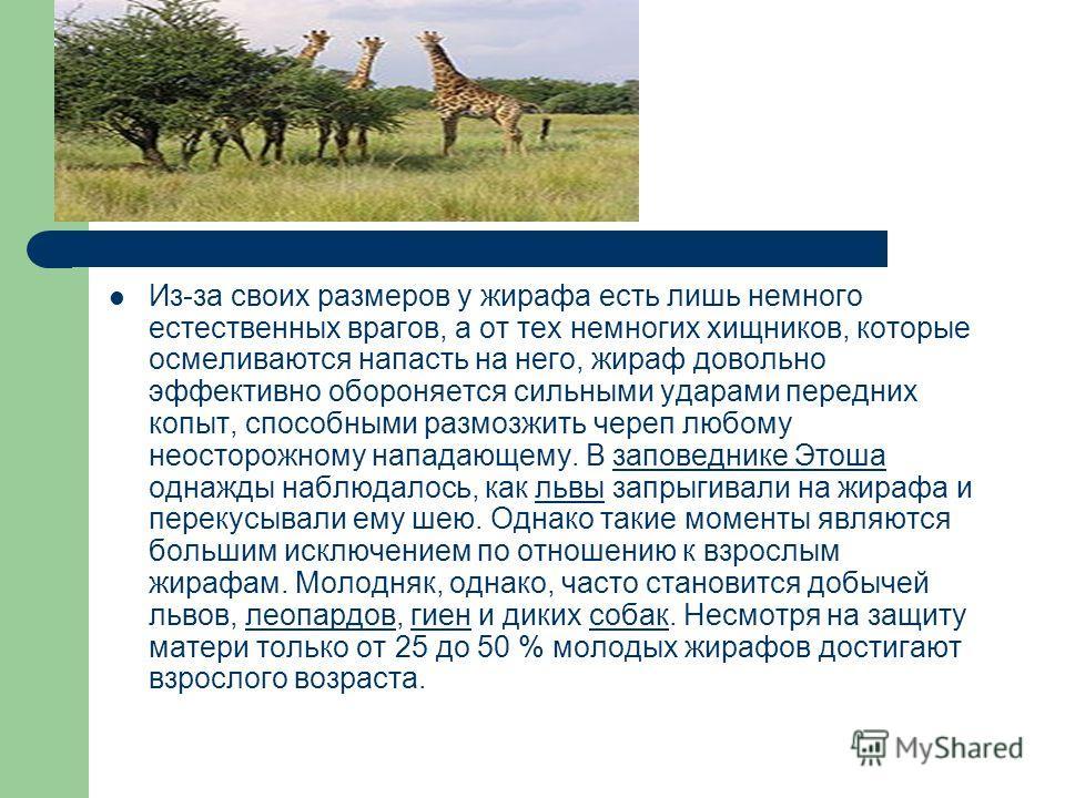 Жира́ф млекопитающее из отряда парнокопытных, семейства жирафовых. Является самым высоким наземным животным планеты. Иногда называется степным жирафом. Самцы жирафа достигают высоты до 5,5 м и весят до 900 кг. Самки, как правило, немного меньше и лег