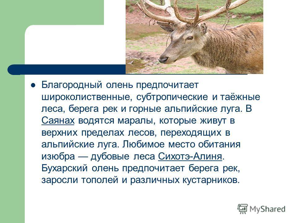 Благородный олень объединяет в себе много подвидов, представители которых отличаются друг от друга только размерами, весом, окраской и некоторыми другими отличиями. Кавказский олень, европейский олень, марал, бухарский олень или тугайный олень, вапит
