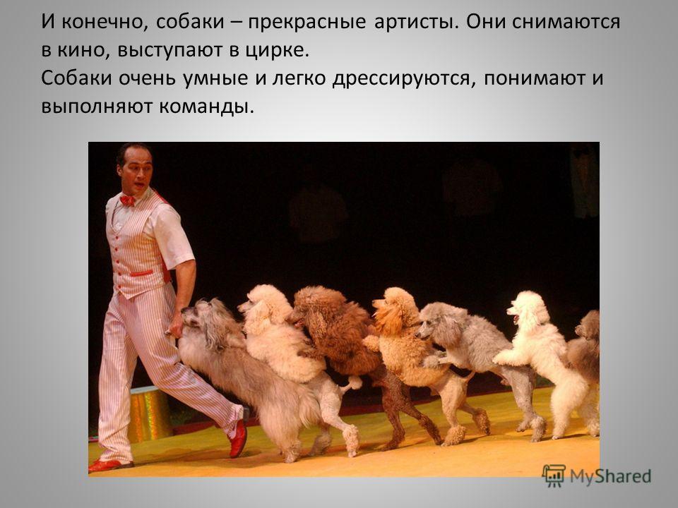 И конечно, собаки – прекрасные артисты. Они снимаются в кино, выступают в цирке. Собаки очень умные и легко дрессируются, понимают и выполняют команды.