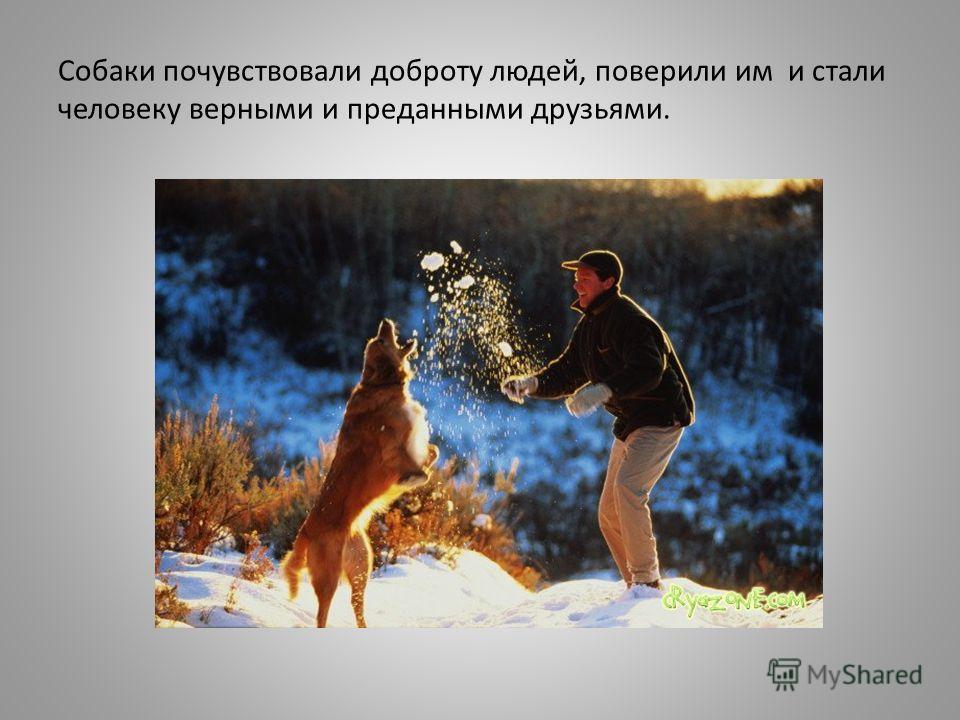 Собаки почувствовали доброту людей, поверили им и стали человеку верными и преданными друзьями.