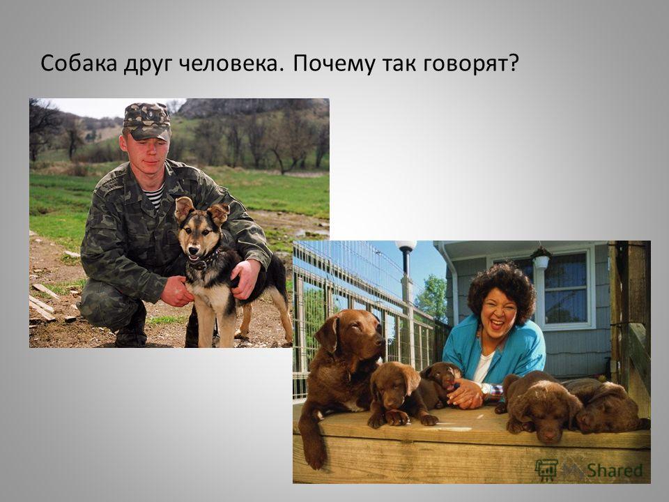 Собака друг человека. Почему так говорят?