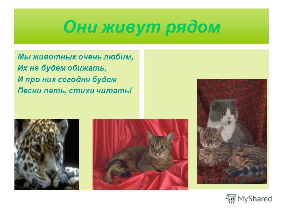 Они живут рядом Мы животных очень любим, Их не будем обижать, И про них сегодня будем Песни петь, стихи читать!