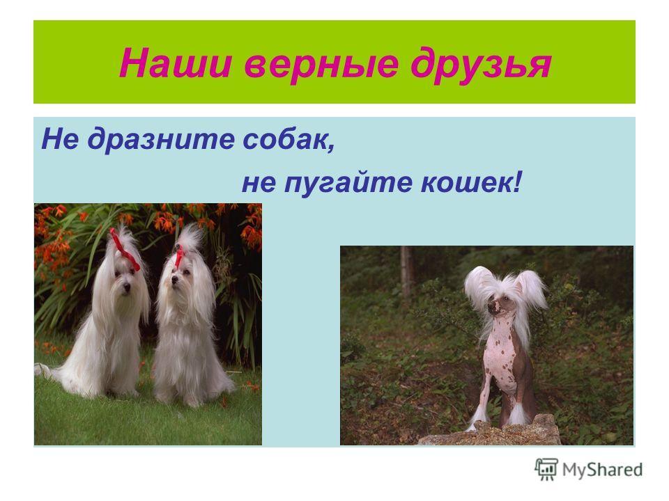 Наши верные друзья Не дразните собак, не пугайте кошек!