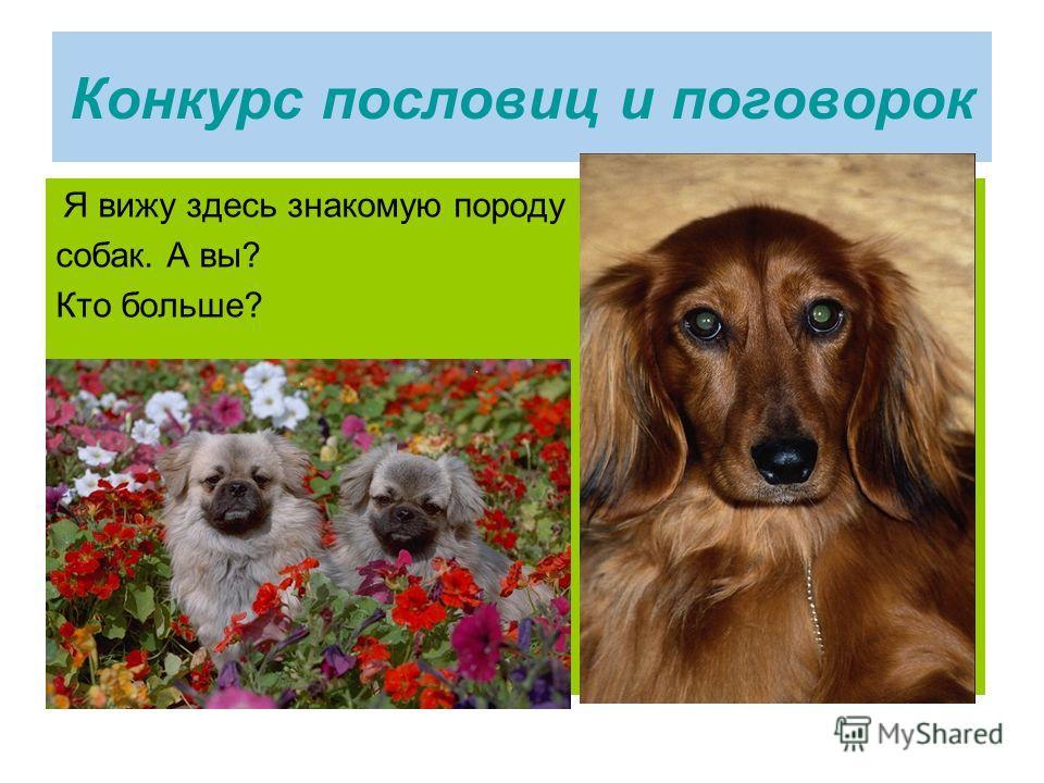Конкурс пословиц и поговорок Я вижу здесь знакомую породу собак. А вы? Кто больше?