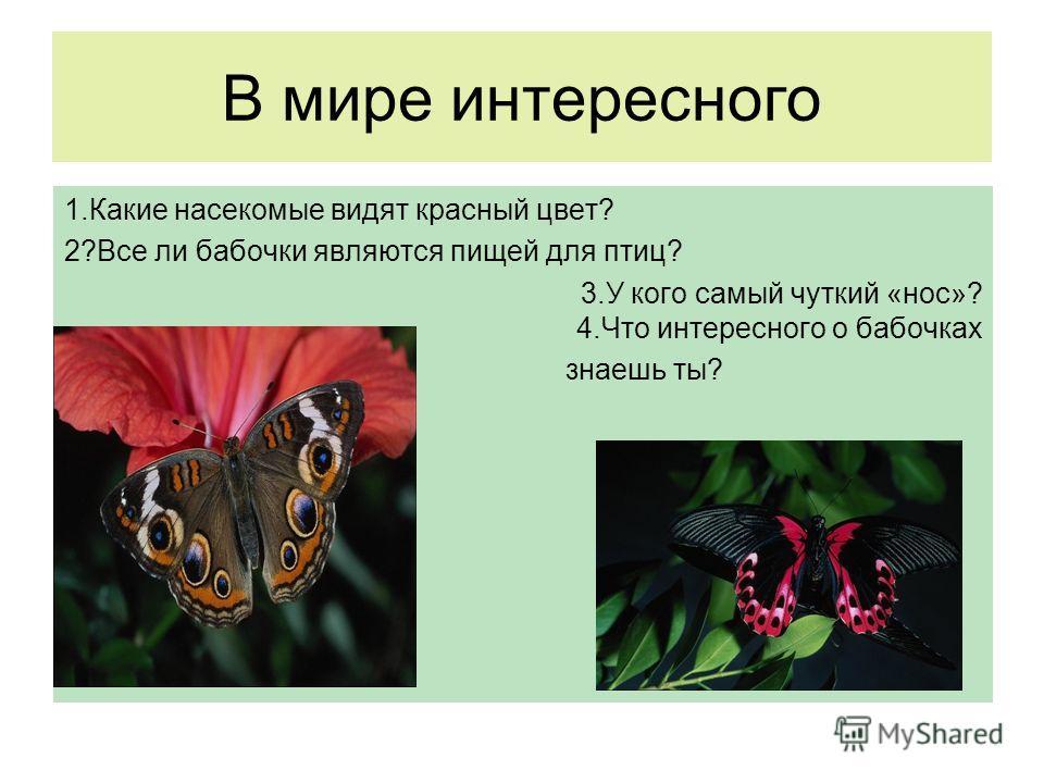 В мире интересного 1. Какие насекомые видят красный цвет? 2?Все ли бабочки являются пищей для птиц? 3. У кого самый чуткий «нос»? 4. Что интересного о бабочках знаешь ты?
