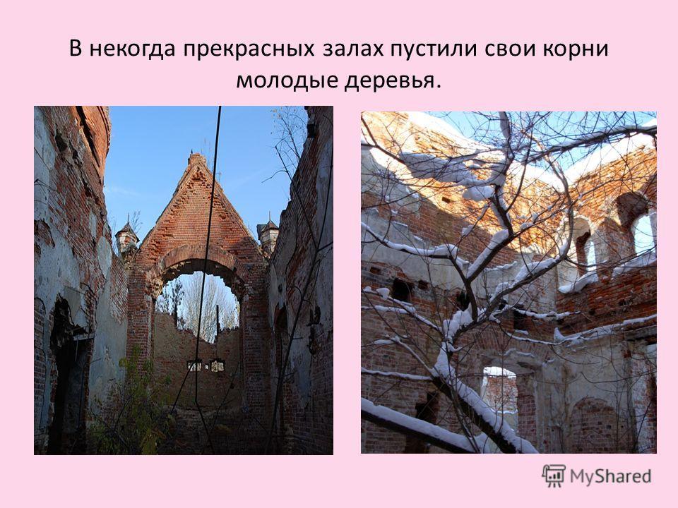 В некогда прекрасных залах пустили свои корни молодые деревья.