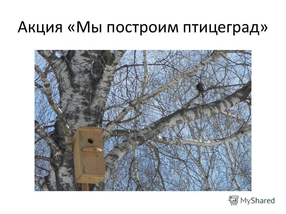 Акция «Мы построим птицеград»