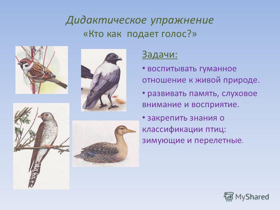 Дидактическое упражнение «Кто как подает голос?» Задачи: воспитывать гуманное отношение к живой природе. развивать память, слуховое внимание и восприятие. закрепить знания о классификации птиц: зимующие и перелетные.