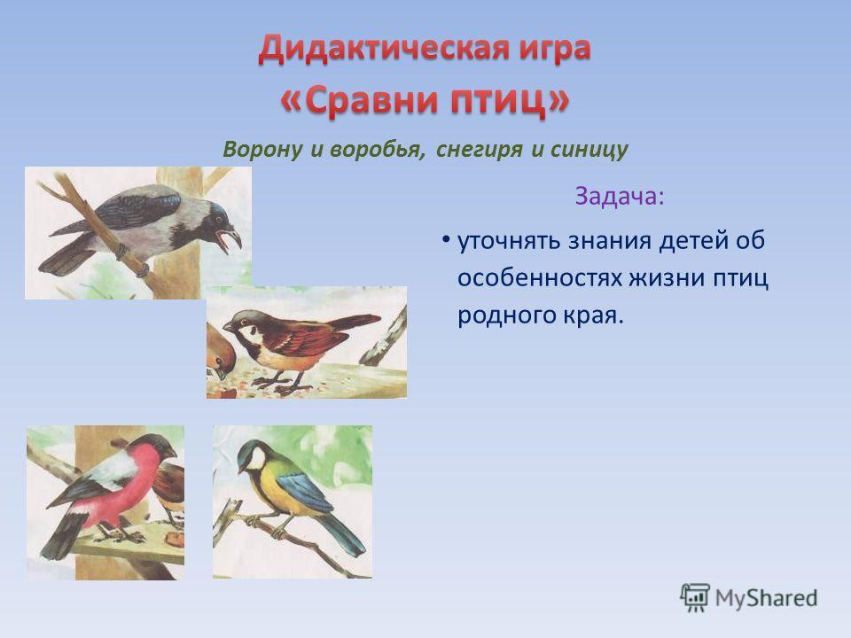 Задача: уточнять знания детей об особенностях жизни птиц родного края.