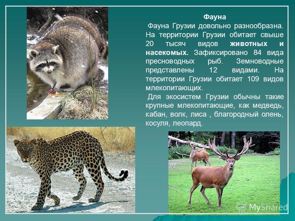 Фауна Фауна Грузии довольно разнообразна. На территории Грузии обитает свыше 20 тысяч видов животных и насекомых. Зафиксировано 84 вида пресноводных рыб. Земноводные представлены 12 видами. На территории Грузии обитает 109 видов млекопитающих. Для эк