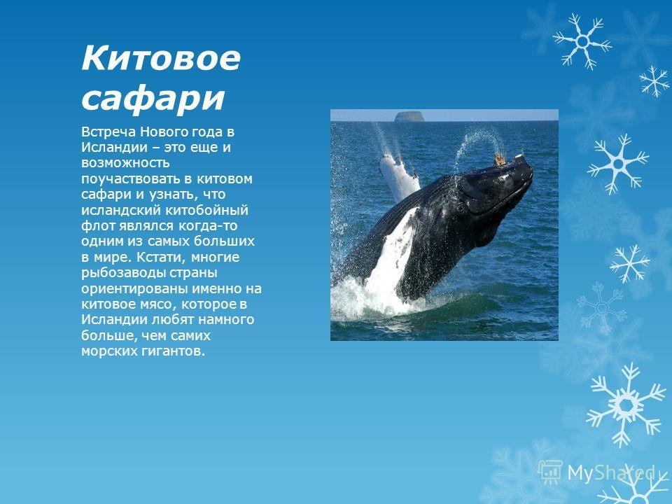Китовое сафари Встреча Нового года в Исландии – это еще и возможность поучаствовать в китовом сафари и узнать, что исландский китобойный флот являлся когда-то одним из самых больших в мире. Кстати, многие рыбозаводы страны ориентированы именно на кит