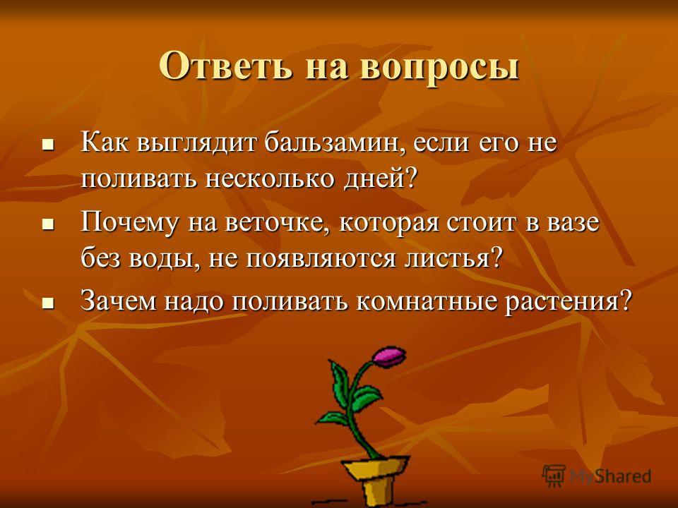 Ответь на вопросы Как выглядит бальзамин, если его не поливать несколько дней? Как выглядит бальзамин, если его не поливать несколько дней? Почему на веточке, которая стоит в вазе без воды, не появляются листья? Почему на веточке, которая стоит в ваз