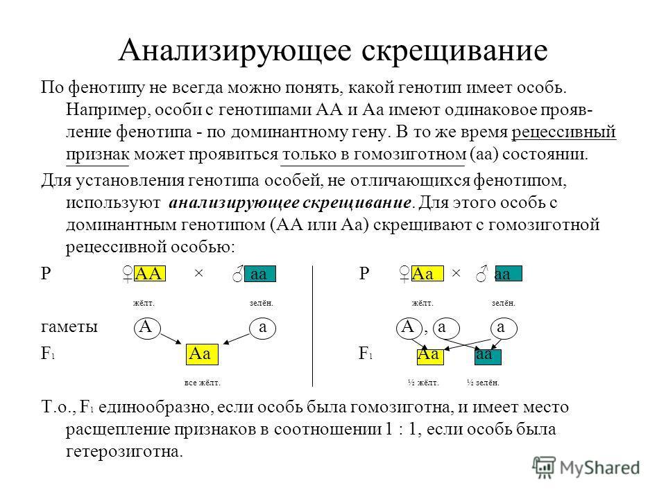 Анализирующее скрещивание По фенотипу не всегда можно понять, какой генотип имеет особь. Например, особи с генотипами АА и Аа имеют одинаковое прояв- ление фенотипа - по доминантному гену. В то же время рецессивный признак может проявиться только в г