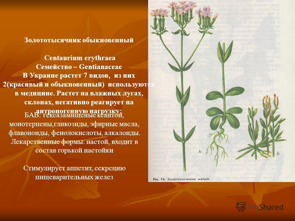 Золототысячник обыкновенный Centaurium erythraea Семейство – Gentianaceae В Украине растет 7 видов, из них 2(красивый и обыкновенный) используются в медицине. Растет на влажных лугах, склонах, негативно реагирует на антропогенную нагрузку; БАВ: гекса