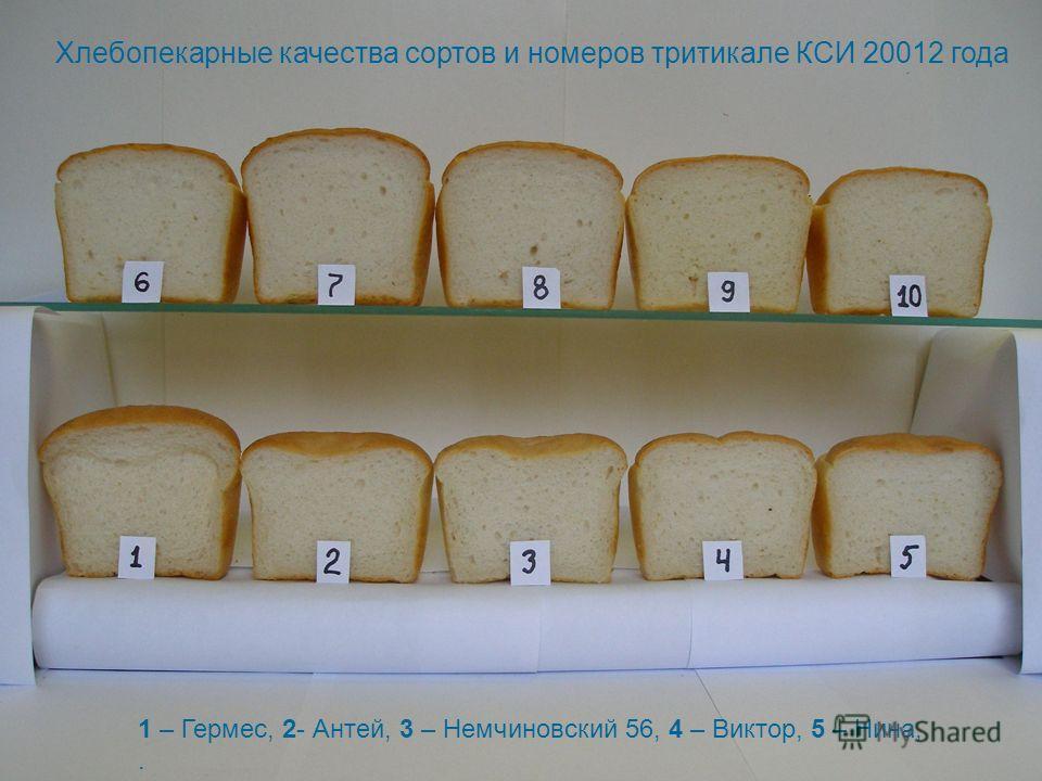 Хлебопекарные качества сортов и номеров тритикале КСИ 20012 года 1 – Гермес, 2- Антей, 3 – Немчиновский 56, 4 – Виктор, 5 – Нина,.
