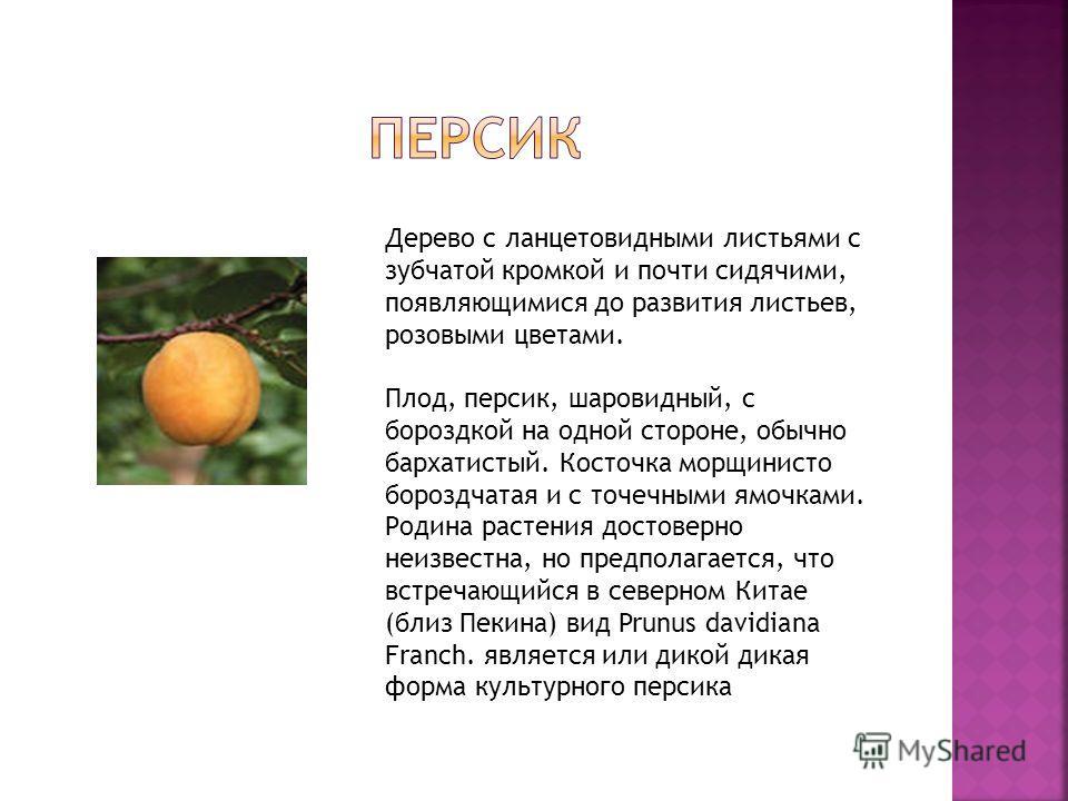 Дерево с ланцетовидными листьями с зубчатой кромкой и почти сидячими, появляющимися до развития листьев, розовыми цветами. Плод, персик, шаровидный, с бороздкой на одной стороне, обычно бархатистый. Косточка морщинисто бороздчатая и с точечными ямочк