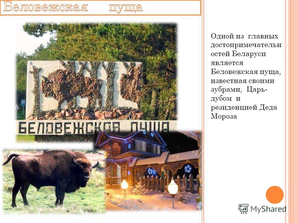 Одной из главных достопримечательн остей Беларуси является Беловежская пуща, известная своими зубрами, Царь- дубом и резиденцией Деда Мороза