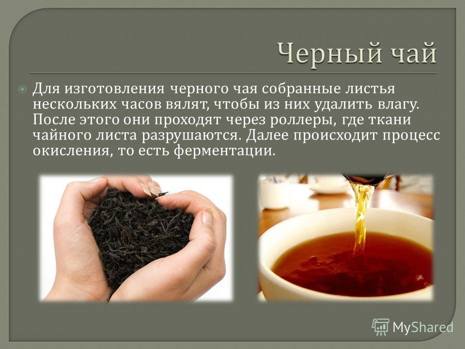 Для изготовления черного чая собранные листья нескольких часов вялят, чтобы из них удалить влагу. После этого они проходят через роллеры, где ткани чайного листа разрушаются. Далее происходит процесс окисления, то есть ферментации.