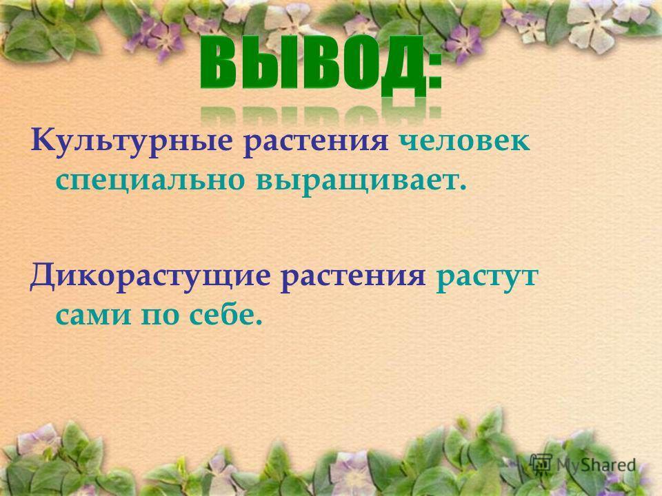 Культурные растения человек специально выращивает. Дикорастущие растения растут сами по себе.