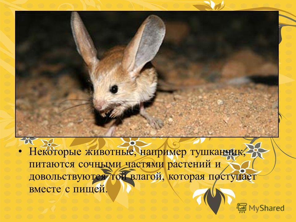 Некоторые животные, например тушканчик, питаются сочными частями растений и довольствуются той влагой, которая поступает вместе с пищей.
