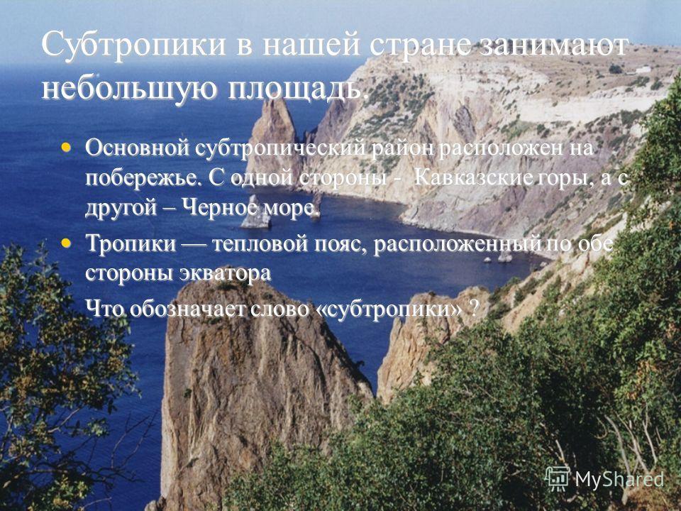 Субтропики в нашей стране занимают небольшую площадь. Основной субтропический район расположен на побережье. С одной стороны - Кавказские горы, а с другой – Черное море. Основной субтропический район расположен на побережье. С одной стороны - Кавказс