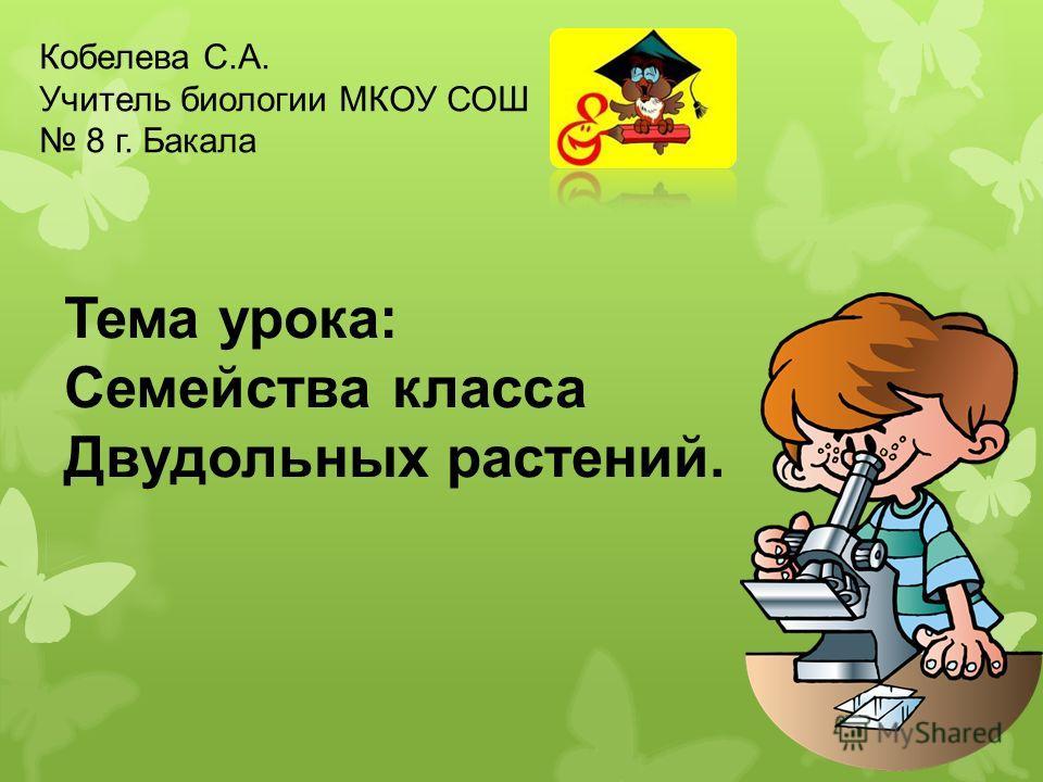 Тема урока: Семейства класса Двудольных растений. Кобелева С.А. Учитель биологии МКОУ СОШ 8 г. Бакала