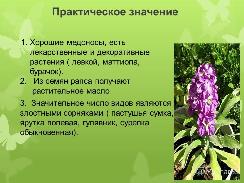 Практическое значение 1. Хорошие медоносы, есть лекарственные и декоративные растения ( левкой, маттиола, бурачок). 2. Из семян рапса получают растительное масло. 3. Значительное число видов являются злостными сорняками ( пастушья сумка, ярутка полев