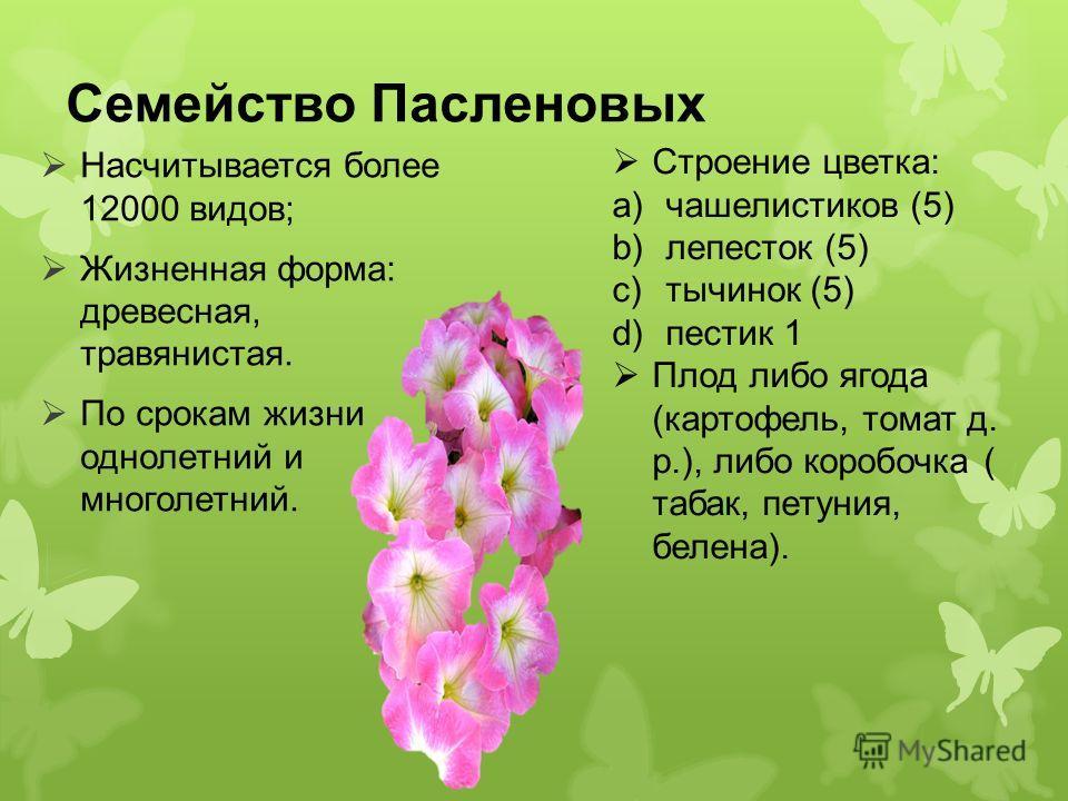 Семейство Пасленовых Насчитывается более 12000 видов; Жизненная форма: древесная, травянистая. По срокам жизни однолетний и многолетний. Строение цветка: a)чашелистиков (5) b)лепесток (5) c)тычинок (5) d)пестик 1 Плод либо ягода (картофель, томат д.