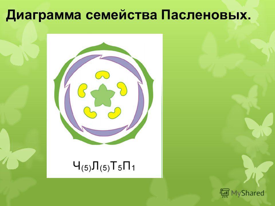 Диаграмма семейства Пасленовых.