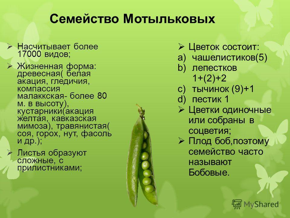 Семейство Мотыльковых Насчитывает более 17000 видов; Жизненная форма: древесная( белая акация, гледичия, компассия малаккская- более 80 м. в высоту), кустарники(акация желтая, кавказская мимоза), травянистая( соя, горох, нут, фасоль и др.); Листья об