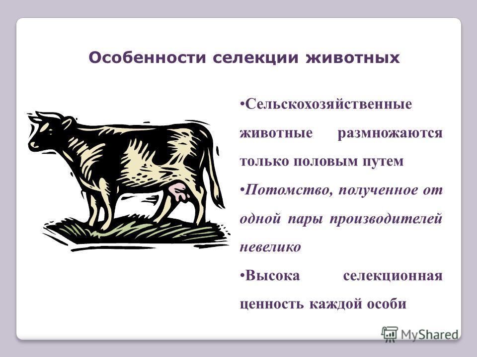 Сельскохозяйственные животные размножаются только половым путем Потомство, полученное от одной пары производителей невелико Высока селекционная ценность каждой особи Особенности селекции животных