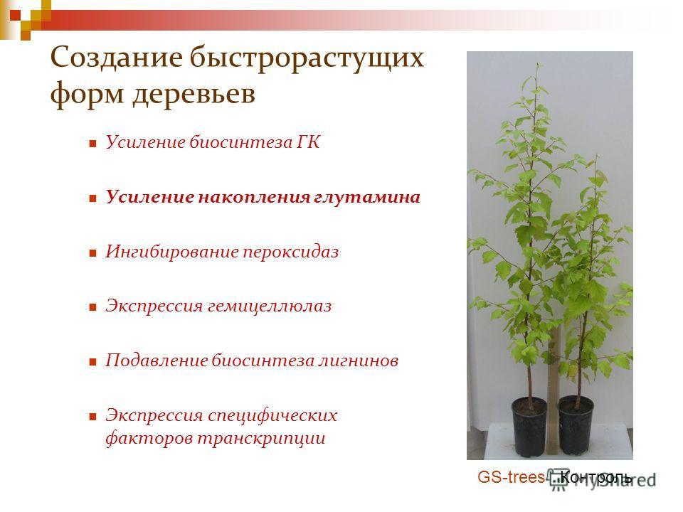 Создание быстрорастущих форм деревьев Усиление биосинтеза ГК Усиление накопления глутамина Ингибирование пероксидаз Экспрессия гемицеллюлаз Подавление биосинтеза лигнинов Экспрессия специфических факторов транскрипции GS-trees Контроль
