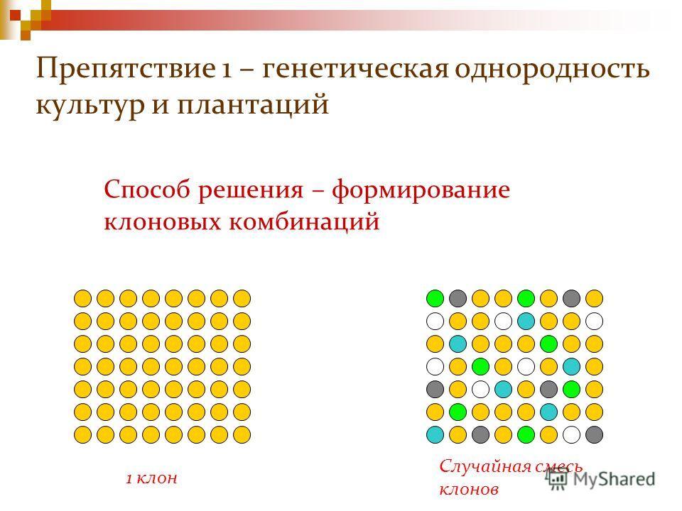 Способ решения – формирование клоновых комбинаций Препятствие 1 – генетическая однородность культур и плантаций 1 клон Случайная смесь клонов