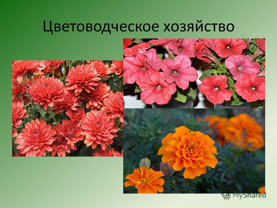Цветоводческое хозяйство
