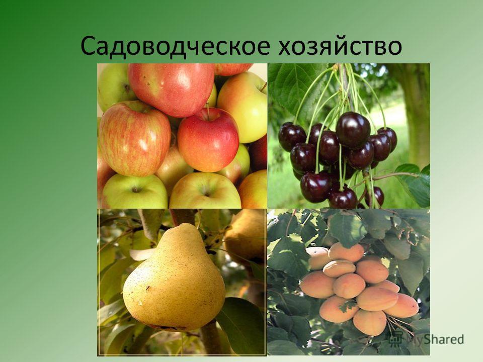 Садоводческое хозяйство