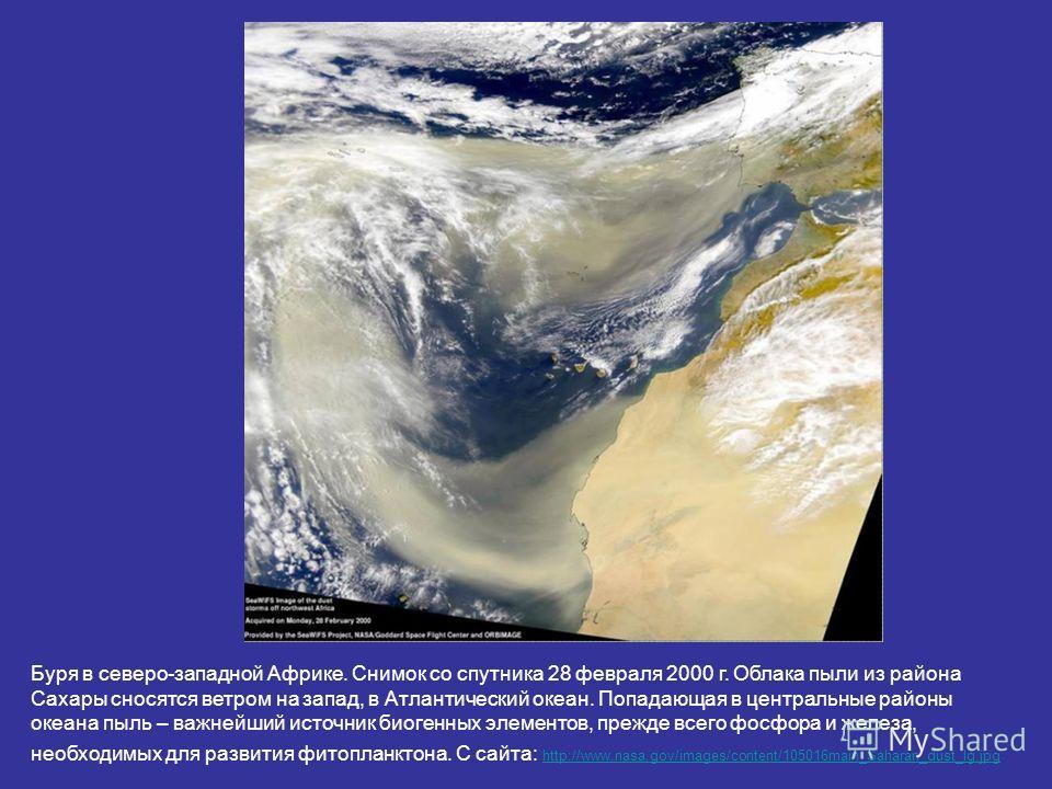 Буря в северо-западной Африке. Снимок со спутника 28 февраля 2000 г. Облака пыли из района Сахары сносятся ветром на запад, в Атлантический океан. Попадающая в центральные районы океана пыль – важнейший источник биогенных элементов, прежде всего фосф
