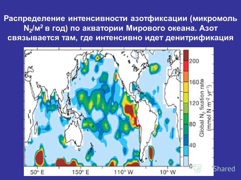 Распределение интенсивности азотфиксации (микромоль N 2 /м 2 в год) по акватории Мирового океана. Азот связывается там, где интенсивно идет денитрификация