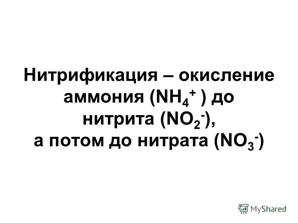 Нитрификация – окисление аммония (NH 4 + ) до нитрита (NO 2 - ), а потом до нитрата (NO 3 - )