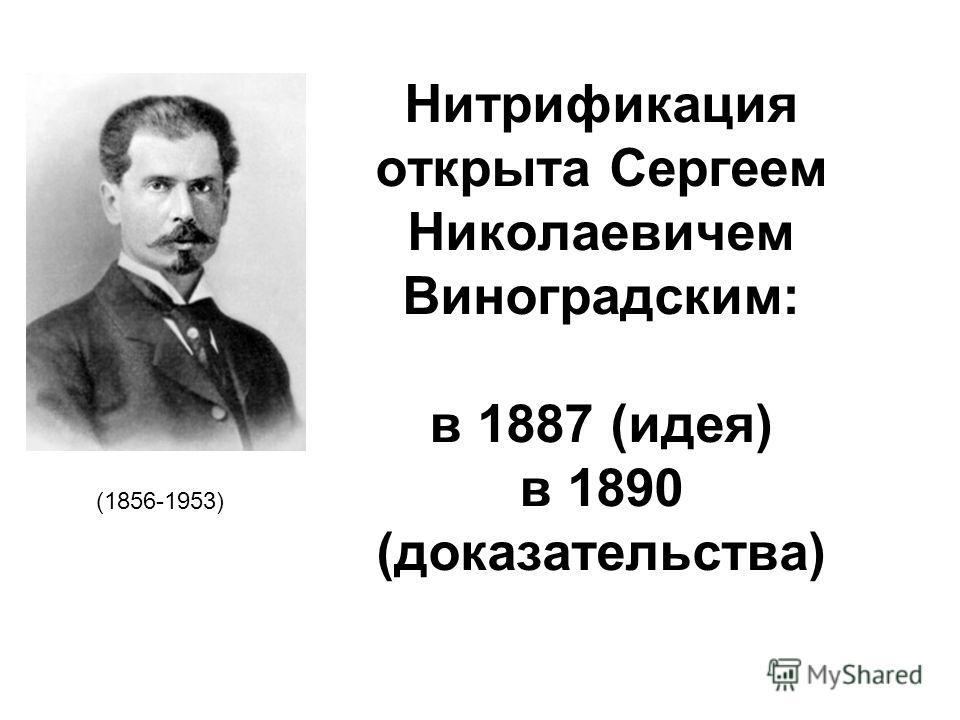 Нитрификация открыта Сергеем Николаевичем Виноградским: в 1887 (идея) в 1890 (доказательства) (1856-1953)