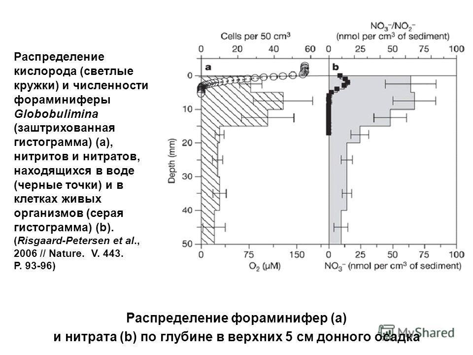 Распределение фораминифер (a) и нитрата (b) по глубине в верхних 5 см донного осадка Распределение кислорода (светлые кружки) и численности фораминиферы Globobulimina (заштрихованная гистограмма) (a), нитритов и нитратов, находящихся в воде (черные т
