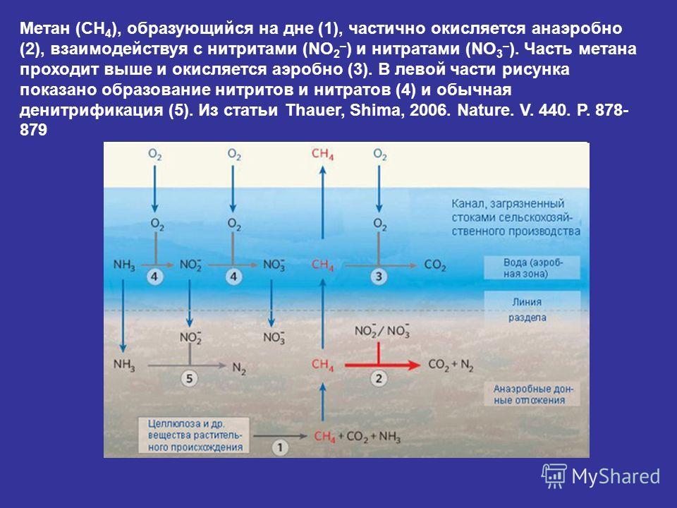 Метан (CH 4 ), образующийся на дне (1), частично окисляется анаэробно (2), взаимодействуя с нитритами (NO 2 – ) и нитратами (NO 3 – ). Часть метана проходит выше и окисляется аэробно (3). В левой части рисунка показано образование нитритов и нитратов