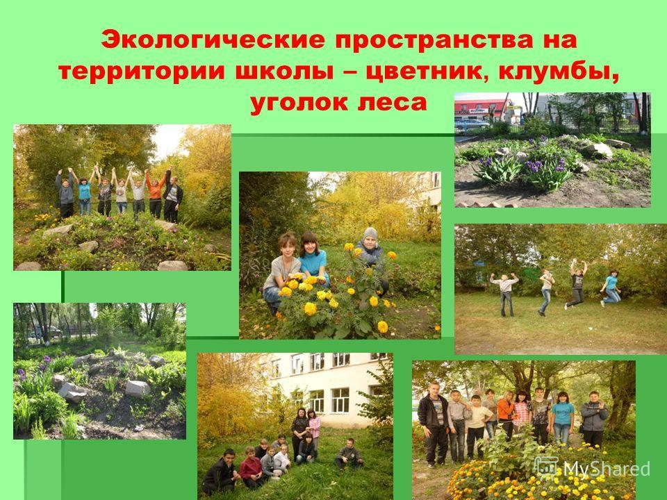 Экологические пространства на территории школы – цветник, клумбы, уголок леса