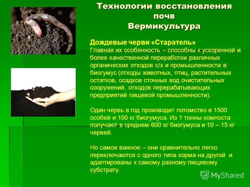 Технологии восстановления почв Вермикультура - Дождевые черви «Старатель» Главная их особенность – способны к ускоренной и более качественной переработки различных органических отходов с/х и промышленности в биогумус (отходы животных, птиц, раститель