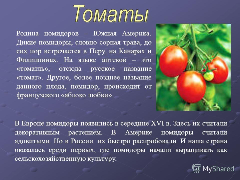 Родина помидоров – Южная Америка. Дикие помидоры, словно сорная трава, до сих пор встречается в Перу, на Канарах и Филиппинах. На языке ацтеков – это «томатль», отсюда русское название «томат». Другое, более позднее название данного плода, помидор, п